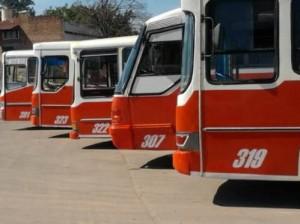 escolare buses
