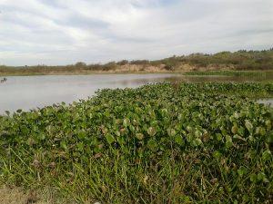 800px-vegetacion_autoctona_en_el_humedal_de_el_tonelero